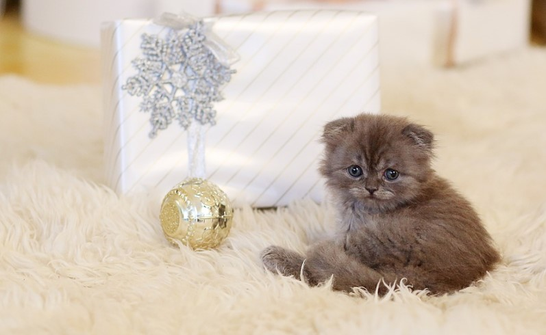 cat gift ideas for cat owners