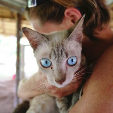 Can Cats Recover From Poisoning