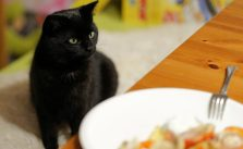 What foods are poisonous to cats