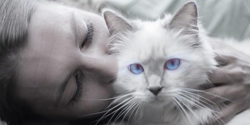 talk with cat