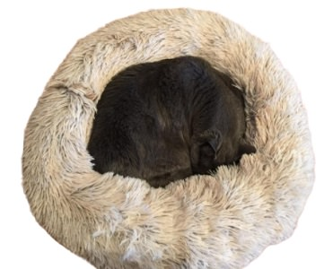 Friends Forever Cat Bed – Donut Bed