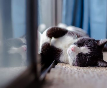 How long does it take a cat to adjust to a new home