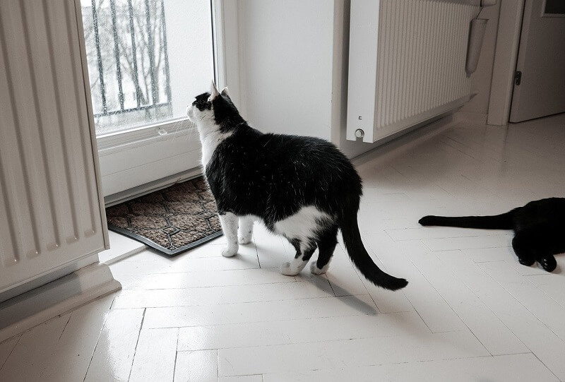 Cat Alone at Home