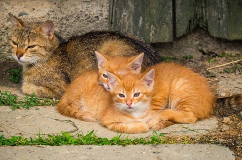 Kittens with cat