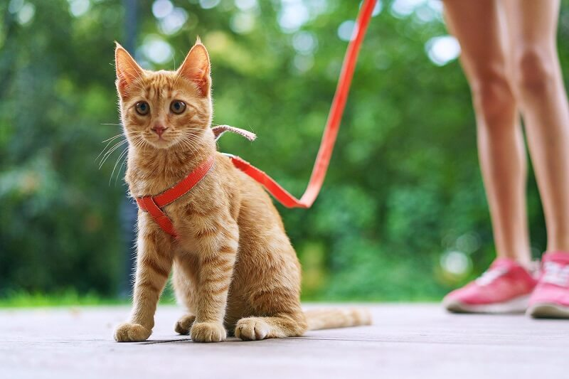 cat and owner walk