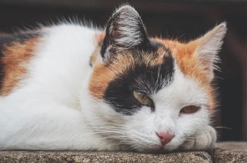 cat behavior changed