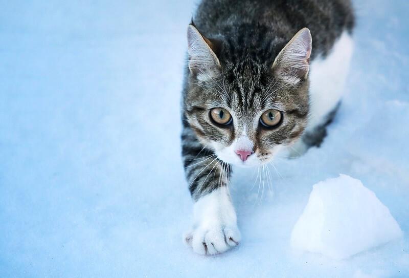 cat in cold