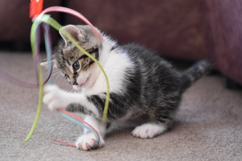play with cat