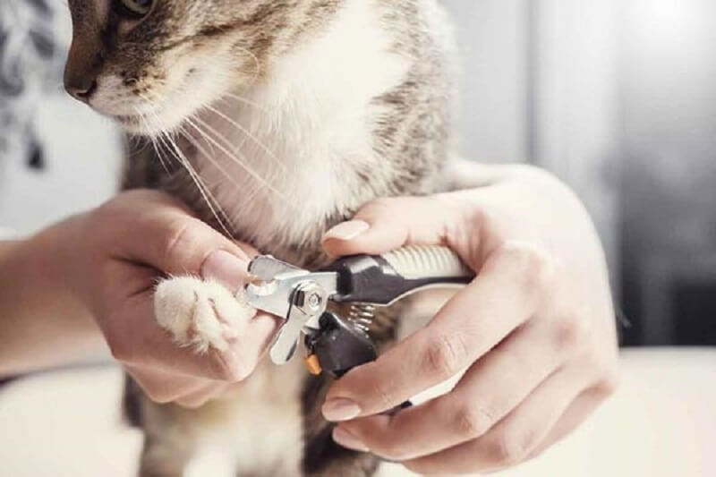 Clipping cat nails